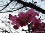 春天賞花季2月天4